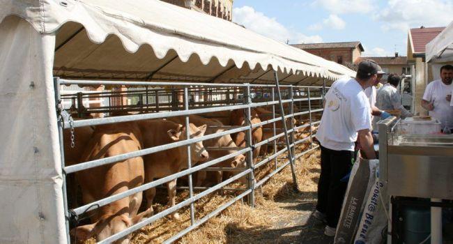 Le GDA proposait des grillades le samedi midi et les visiteurs pouvaient admirer les broutards (un broutard est un veau qui a entre quatre et huit mois maximum et qui est destiné à être engraissé)./Photo YCS