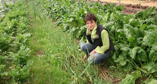Janine Lafon cultive avec passion sous ses serres installées à L'Isle-en-Dodon./Photo DDM