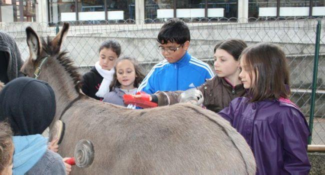 e matin, les enfants ont pu approcher les ânes, les caresser, les brosser, avec la complicité bienveillante de Stéphane Laisné./Photo DDM