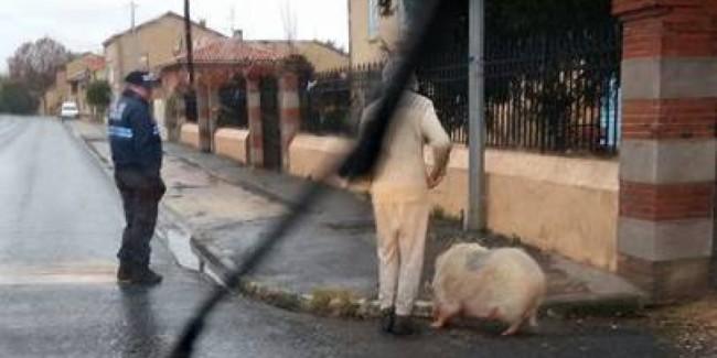 La fuyarde dans les rues du centre-ville./Photo DR Gendarmerie de Haute-Garonne